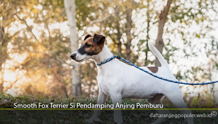 Smooth Fox Terrier Si Pendamping Anjing Pemburu